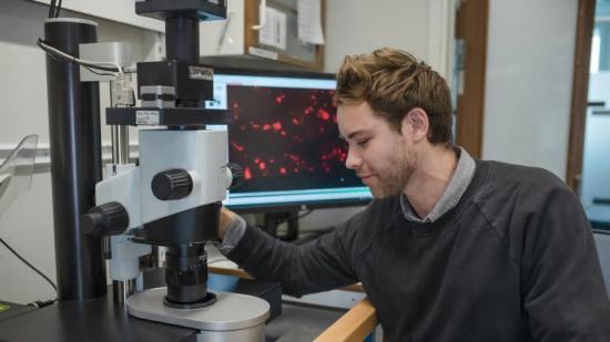 Max Hahn, doktorand vid Umeå centrum för molekylär medicin, studerar vävnadsmaterial med fluorescerande ljusfältsmikroskop.