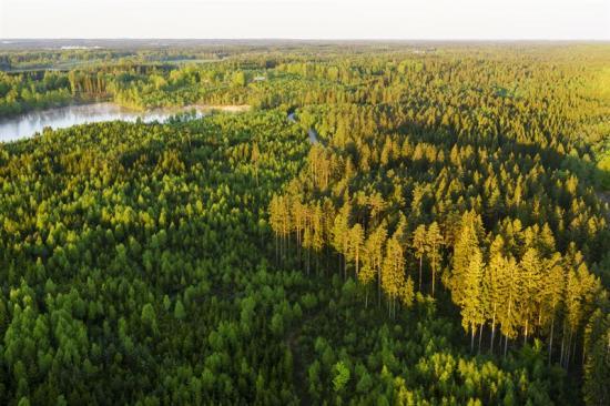 Skogen spelar en allt viktigare roll i det biobaserade samhället