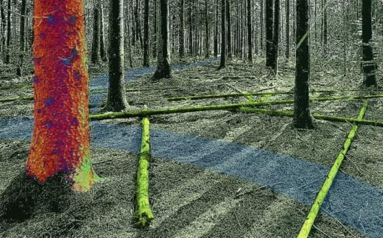 Virtuell skogsmiljö driven med fysikbaserad simulering.