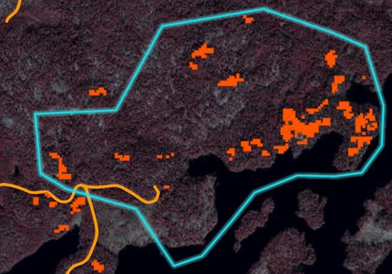 Holmen karta över skog angripen av granbarkborre.