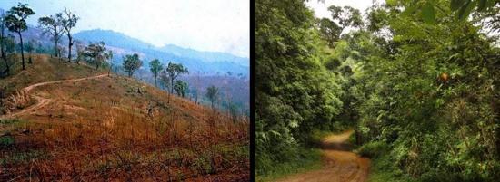<span><span><span>Notera vägen för jämförelse före och efter ett återplantering av skog i Thailand. Foto: S. Elliott, Forest Restoration Research Unit, Chiang Mai University</span></span></span>