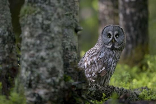 <span>23organisationer går samman i ett upprop för de statliga skogarna, där de kräver att regeringen ökar miljöambitionerna så att viktiga naturvärden kan skyddas.</span>