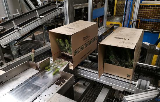 Varje låda rymmer 90 plantor och under 2019 ska närmare 250 000 lådor säljas.
