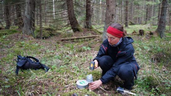 Lokalt kallare platser kan bli viktiga för temperaturkänsliga växter och den biologiska mångfalden i ett förändrat klimat. Caroline Greiser installerar instrumentet som loggar temperatur i skogen.