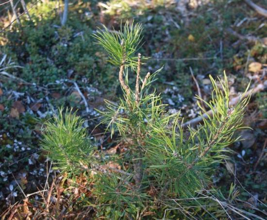 En planta topp-betad av vilt.